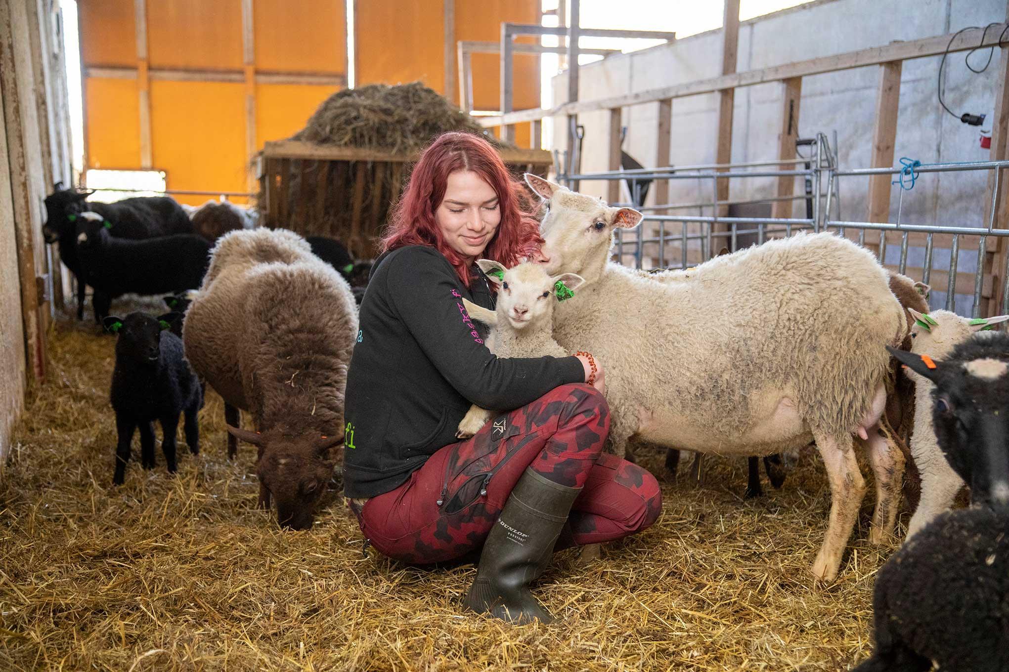 Nainen pitää sylissään karitsaa, ympärillä muita lampaita.