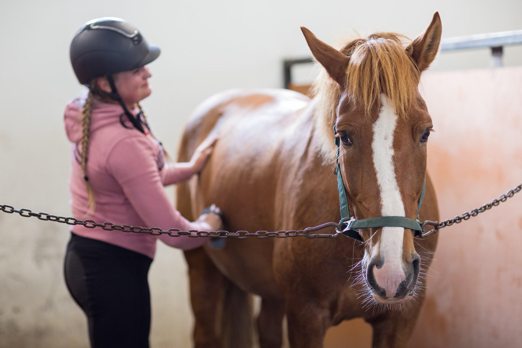 Tyttö harjaa hevosta.