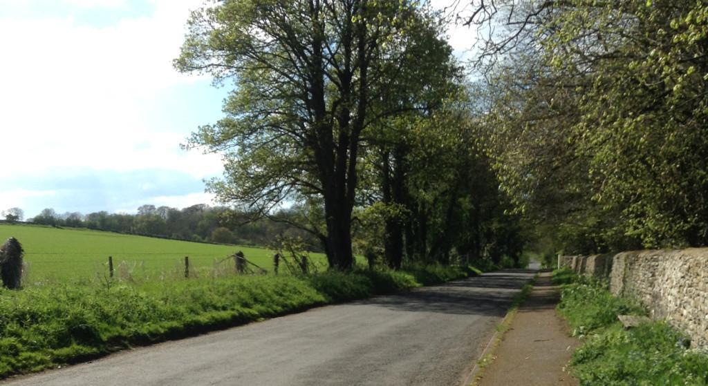 Maisemakuva, jossa vasemmalla vihreää peltoa, keskellä puiden reunustama tie ja oikella kivaita.