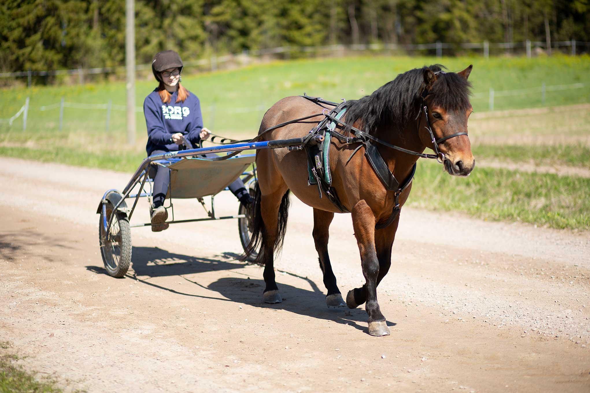 Opiskelijatyttö istuu hevoskärryssä, jota vetää ruskea hevonen.